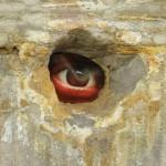 geheimnisvoller Beobachter