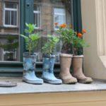 Bepflanzte Gummistiefel im Fenster